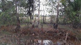 Terre du Bornéo Photo libre de droits