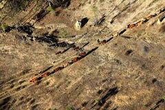 Terre en friche et bétail Photo libre de droits