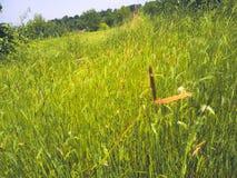 Terre herbeuse photos stock