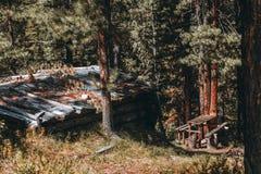 Terre-maison dans la forêt de sunnu Image stock