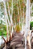 Terre naturelle de tunnel d'arbre Image libre de droits