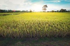 Terre nuageuse de riz de gisement d'herbe verte de nuage en terrasse vert de ciel bleu images stock