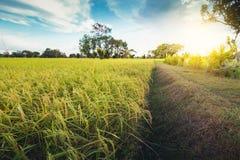 Terre nuageuse de riz de gisement d'herbe verte de nuage en terrasse vert de ciel bleu photos stock