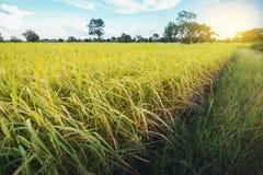 Terre nuageuse de riz de gisement d'herbe verte de nuage en terrasse vert de ciel bleu photo stock