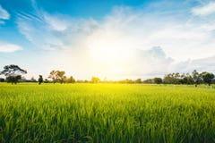 Terre nuageuse de riz de gisement d'herbe verte de nuage en terrasse vert de ciel bleu photographie stock libre de droits