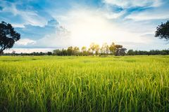 Terre nuageuse de riz de gisement d'herbe verte de nuage en terrasse vert de ciel bleu photos libres de droits