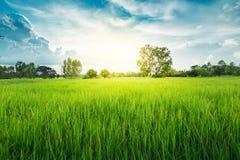 Terre nuageuse de riz de gisement d'herbe verte de nuage en terrasse vert de ciel bleu image stock
