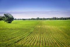 Terre organique de ferme avec des rangées Images libres de droits