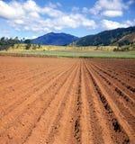 Terre prête pour la plantation de canne photographie stock libre de droits