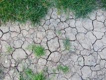 Terre sèche avec des chutes d'herbe Photo libre de droits
