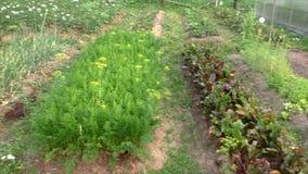 Terre suburbaine plantée avec des lits des légumes clips vidéos