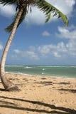terrenas республики punta доминиканских las popy Стоковое фото RF