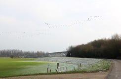 Terreni alluvionali glassati vicino a Cortenoeversebrug, Zutphen Fotografie Stock