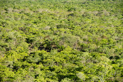 Terreni boscosi dalla cima di roccia nera, parco nazionale di Kasungu Fotografia Stock Libera da Diritti
