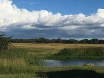 Terreni boscosi di Mukuvusi, Zimbabwe Immagine Stock Libera da Diritti