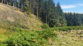 Terreni boscosi di speranza Fotografia Stock Libera da Diritti