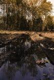 Terreni boscosi in Lelystad Fotografia Stock Libera da Diritti