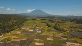 Terreni coltivabili del paesaggio della montagna e villaggio Bali, Indonesia Fotografia Stock