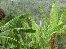 Terreni coltivabili del paesaggio della montagna e villaggio Bali, Indonesia Immagini Stock