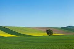 Terreni coltivabili dell'Austria Fotografie Stock