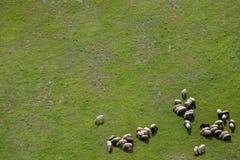 Terreni coltivabili e pecore Fotografie Stock