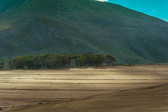 Terreni coltivabili soleggiati Fotografie Stock