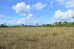 Terreni paludosi 2 fotografia stock libera da diritti