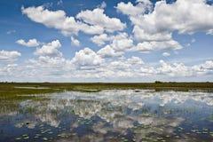 Terreni paludosi Fotografia Stock