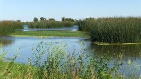 Terreni paludosi acqua e piante con cielo blu archivi video