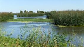 Terreni paludosi acqua e piante con cielo blu accelerato stock footage