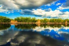 Terreni paludosi di Florida Fotografia Stock