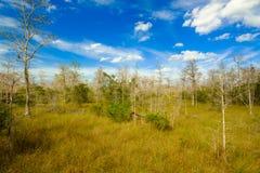 Terreni paludosi di Florida Immagini Stock Libere da Diritti