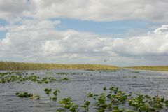Terreni paludosi - Florida Fotografie Stock