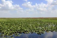 Terreni paludosi, Florida Immagine Stock