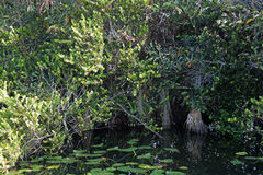 Terreni paludosi, Florida, U.S.A. Fotografia Stock Libera da Diritti