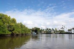 Terreni paludosi, Florida, U.S.A. Immagini Stock Libere da Diritti