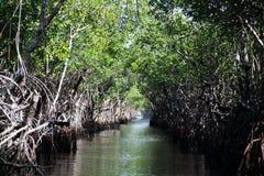 Terreni paludosi, Florida, U.S.A. Immagini Stock