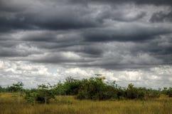Terreni paludosi paesaggio, nuvole Fotografia Stock Libera da Diritti
