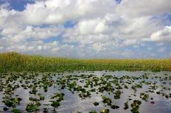Terreni paludosi - vicolo del coccodrillo Immagini Stock
