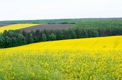 Terreno agricolo con colza Fotografia Stock