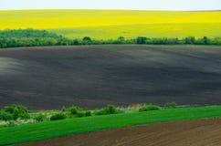 Terreno agricolo con colza ed il giovane girasole giovane e del grano Fotografia Stock Libera da Diritti