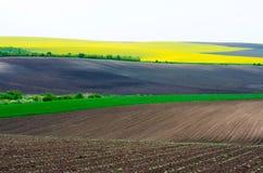 Terreno agricolo con colza ed il giovane girasole giovane e del grano Fotografie Stock Libere da Diritti