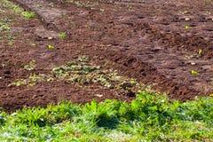 Terreno agricolo con suolo fertile in Asturie fotografie stock libere da diritti