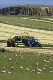 Terreno agricolo - contea Antrim - Irlanda del Nord Fotografia Stock Libera da Diritti