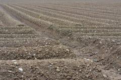 Terreno agricolo del campo del suolo di Brown Fotografie Stock