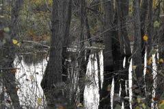 Terreno agricolo ed inondazione Fotografia Stock Libera da Diritti