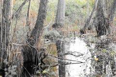 Terreno agricolo ed inondazione Fotografie Stock Libere da Diritti