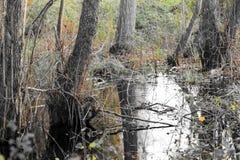 Terreno agricolo ed inondazione Immagini Stock
