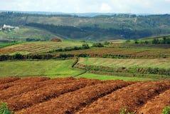 Terreno agricolo indiano Immagini Stock Libere da Diritti