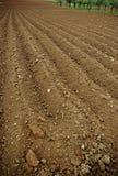 Terreno arabile Fotografie Stock Libere da Diritti